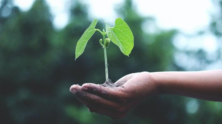 Mesa redonda: Hacia la sostenibilidad rentable del F&B Hotelero